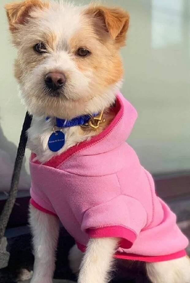 Бездомная собака осталась со щенками. Поначалу четвероногой маме очень не повезло