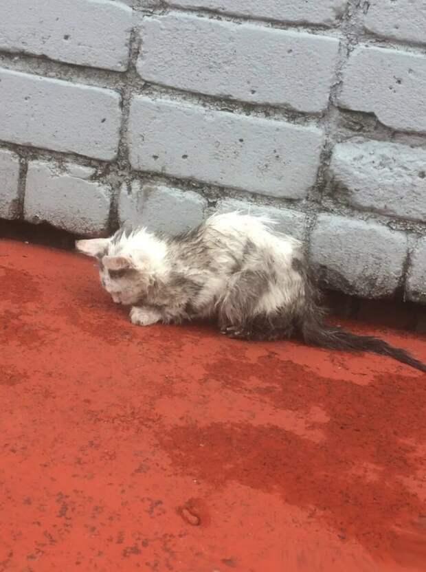 Люди шли мимо больного котенка, только Алена решилась спасти его. Вот каким он стал спустя 3 месяца