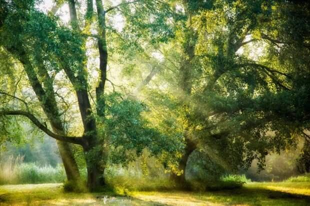Лесные пейзажи из разных стран мира (19 фото)