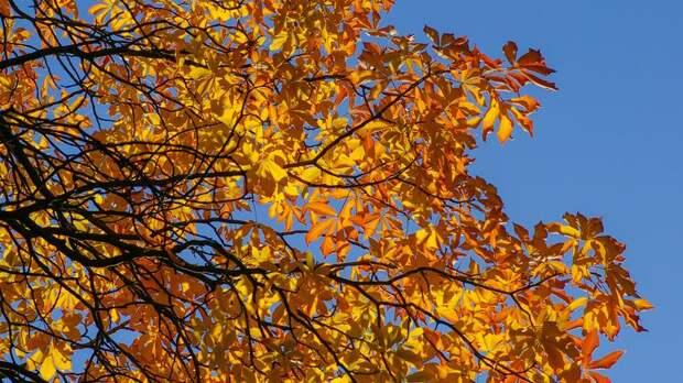 Последняя неделя сентября начнётся в Ленобласти с потепления до +15 градусов
