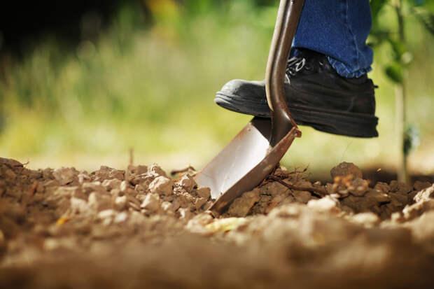 Для земледельца стало обязательным перекапывание грунта