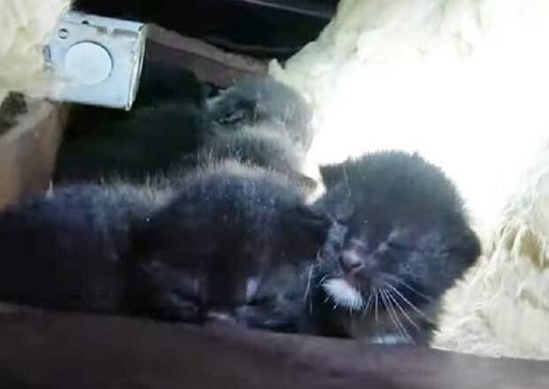 Крошечные котята