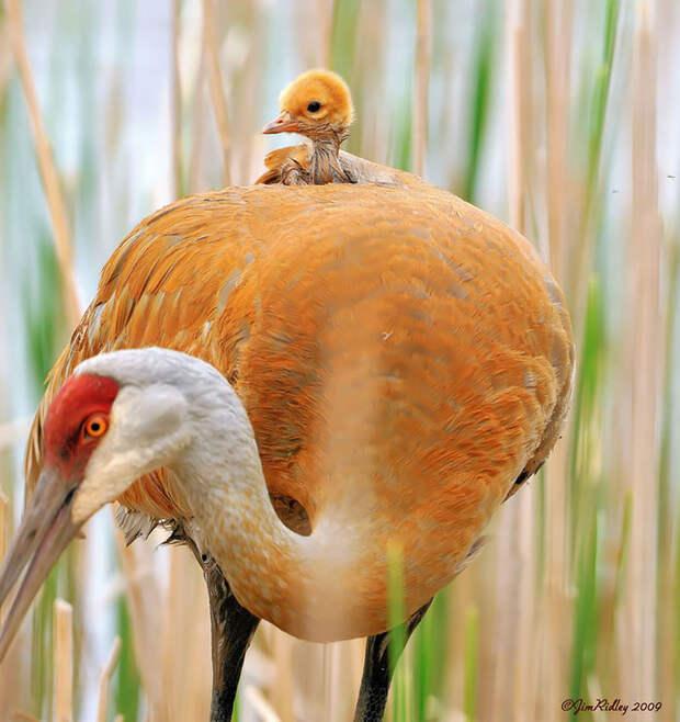 9.  красота, природа, птицы, фото