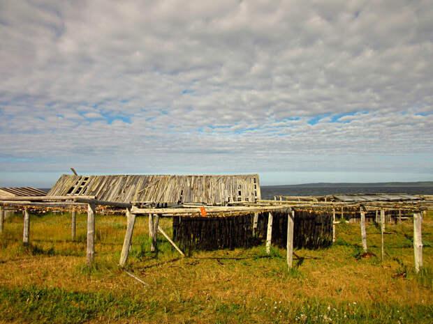 """""""Водорослевая"""" деревня Реболда. Как добывают съедобные водоросли на Соловецких островах в Белом море."""