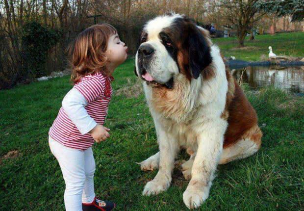 дети должны расти с домашними животными (6)