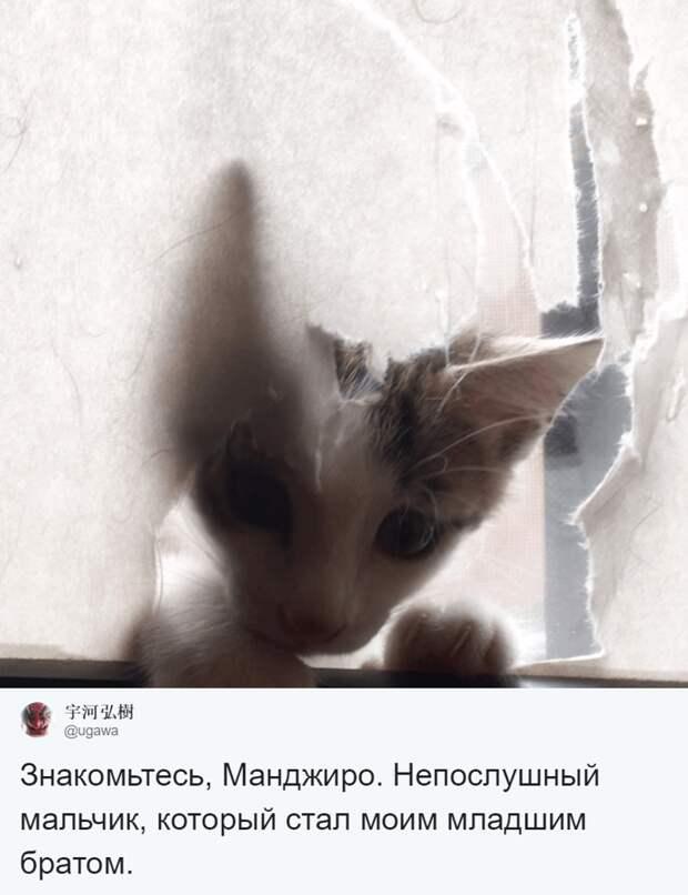 Манджиро появился в семье художника летом 2017 года домашний питомец, животные, коты, лапки, художник, япония