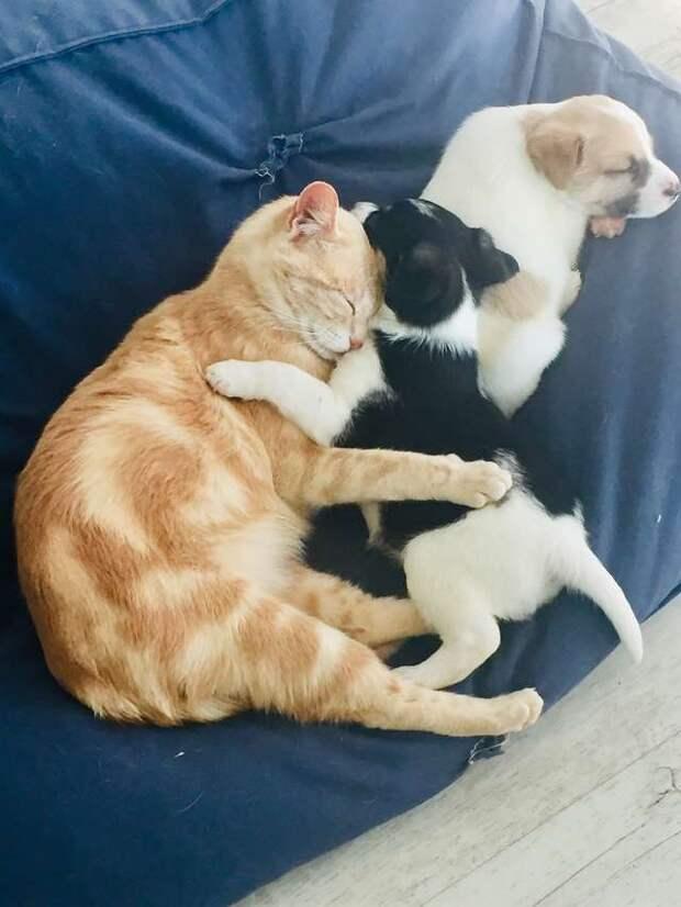 Кошка потеряла своих котят, но заменила маму осиротевшим щенкам