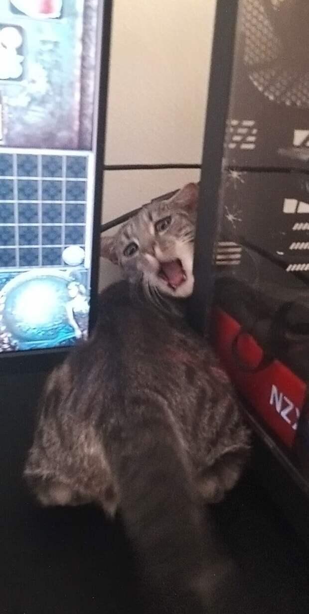 Наша кошка ночью полезла куда не надо, и застряла