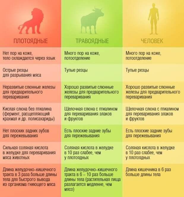 Сравнение хищников и травоядных