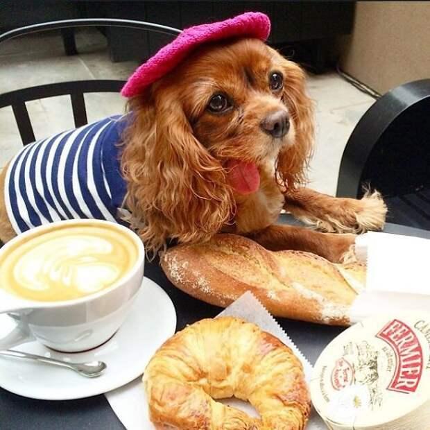 toast dog, собака с языком наружу, тост спаниель с языком наружу