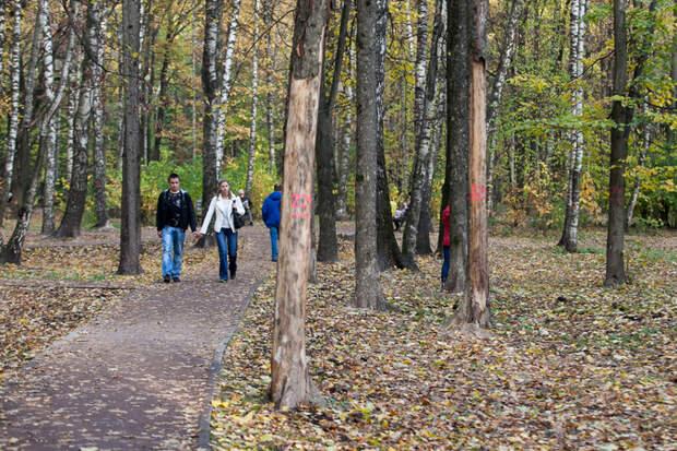 Против гнили и жучка: когда вырубка деревьев нужна экологии