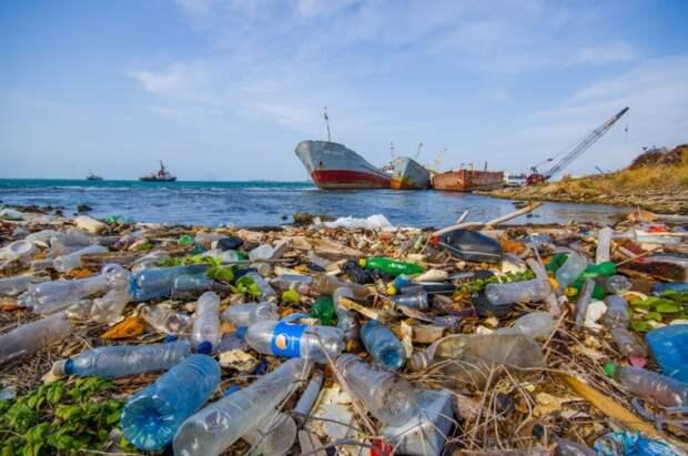 Через 5 лет в России могут отказаться от пластиковой одноразовой посуды