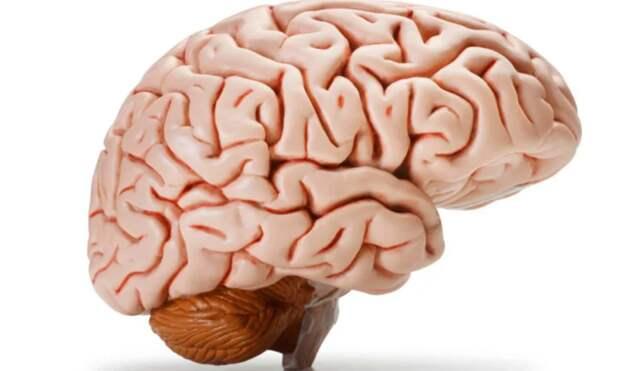 Ученые обнаружили отложения меди и железа в мозге двух пациентов с болезнью Альцгеймера