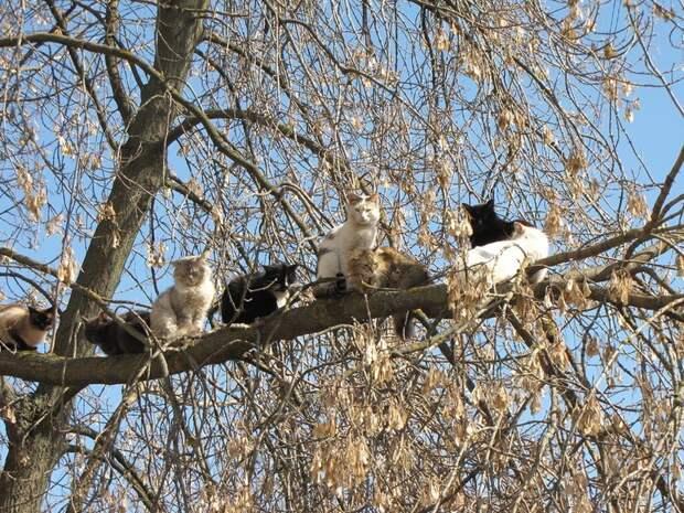 Весна пришла — коты прилетели!
