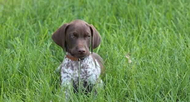 Собаки для дачи — какая порода лучше