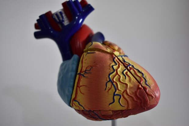 Кардиологи нашли способ выявить бессимптомную смертельную болезнь