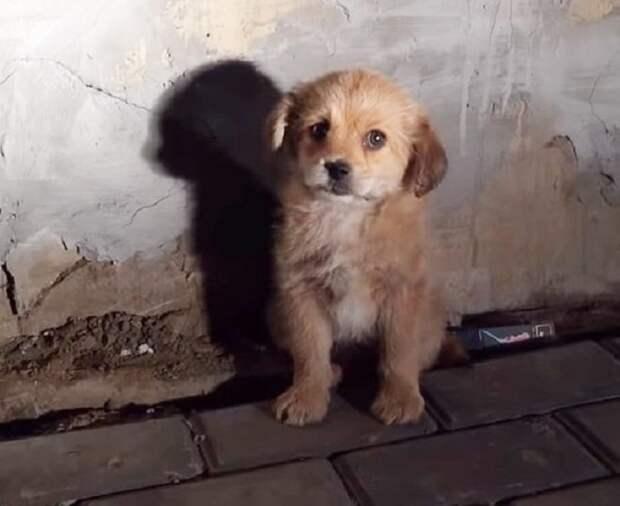 Маленького уличного щенка никто не замечал, но запись неравнодушного парня изменила его судьбу