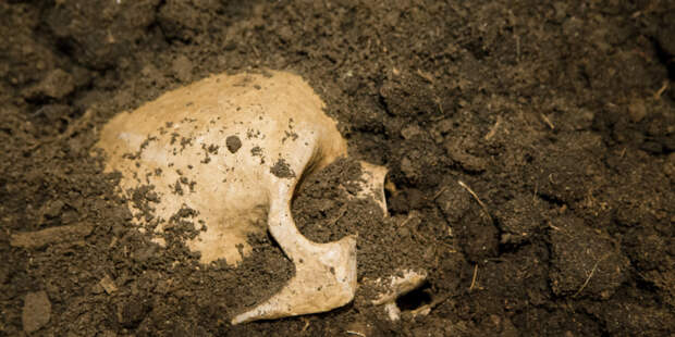 В затерянном египетском городе нашли скелет человека