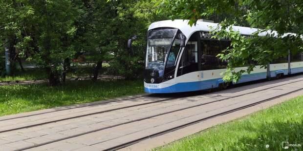 Упавшее дерево стало причиной задержки трамваев на Сходненской