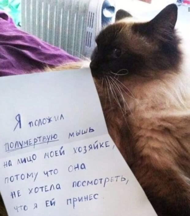 сиамский кот с запиской