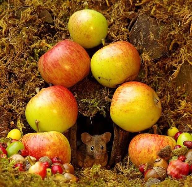 Мышки не возражают против таких вкусных декораций.