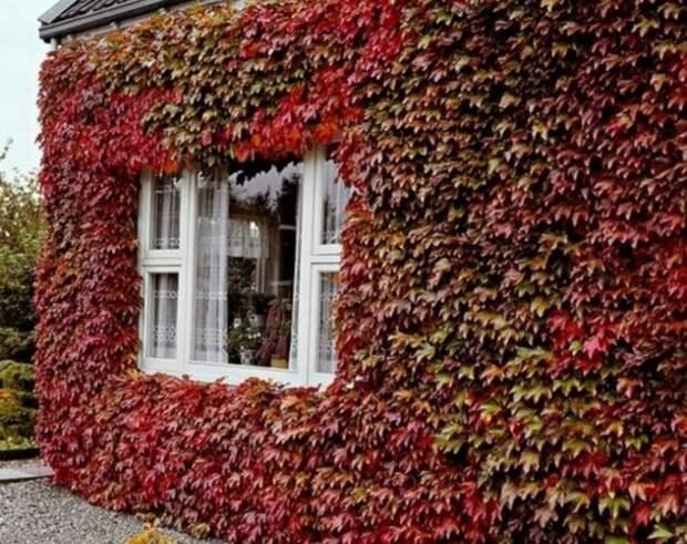 Вертикальное озеленение дома снаружи: 6 интересных вариантов с фото