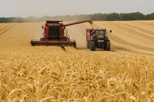 В Удмуртии растут объемы экспорта сельхозпродукции