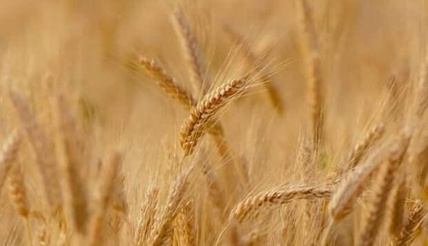 Омские аграрии по максимуму используют каждый солнечный день