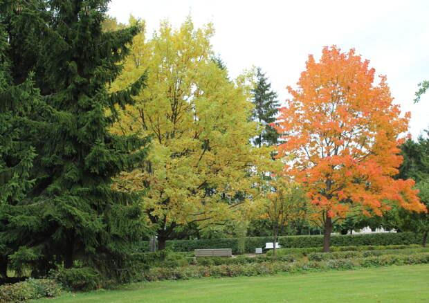 """""""Осень разноцветными холстами красит небо, землю и леса..."""" и Петергоф"""