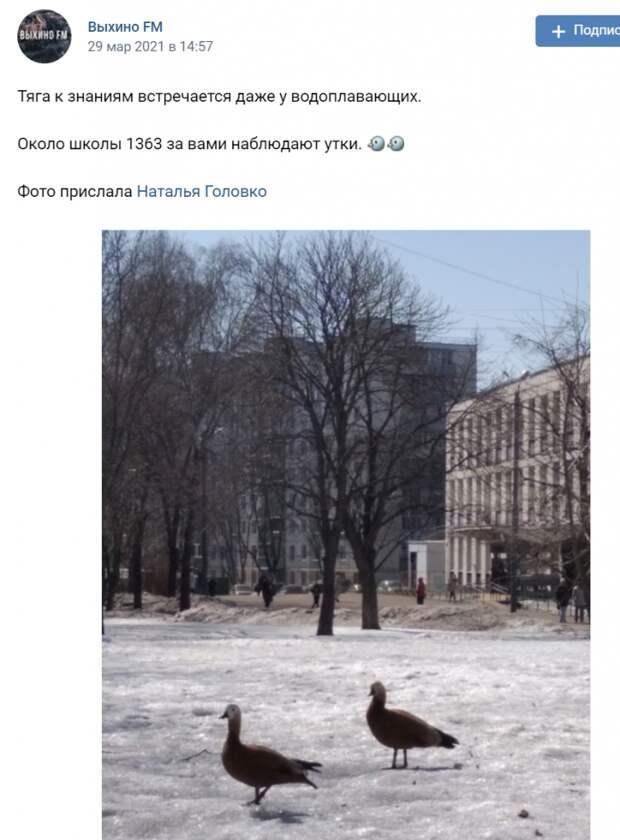 По улице в Выхине- Жулебине прогуливались дикие утки