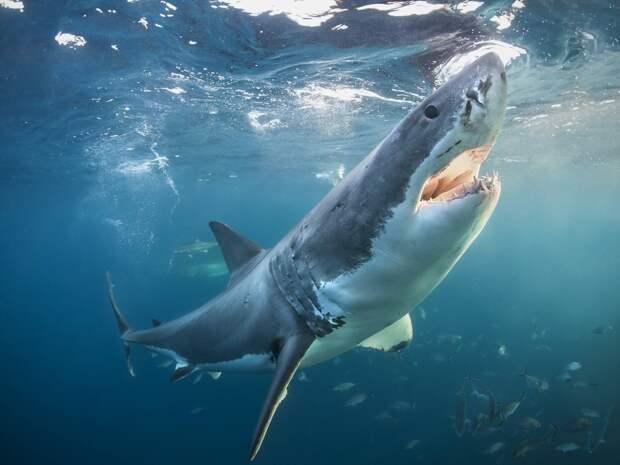5 мифов об акулах