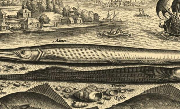 Почему моряки никогда не ловили рыбу