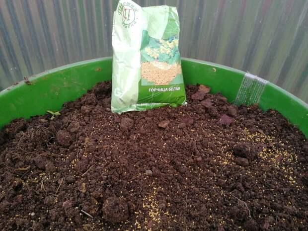 Как подготовить бочку к выращиванию огурцов
