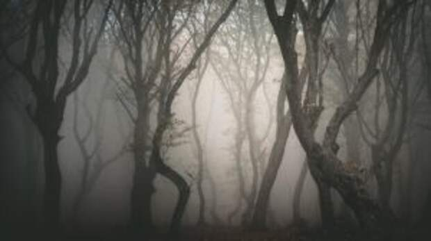 Трансильванский лес Хойа-Бачу