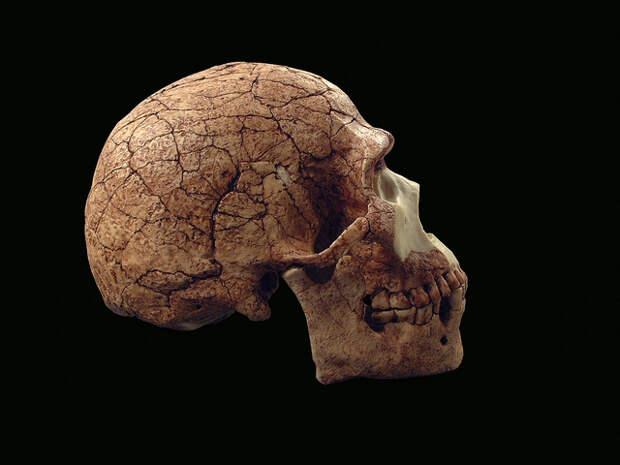 через homo sapiens