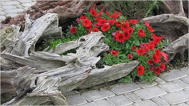 Рутарий своими руками. Как сделать сад корней.