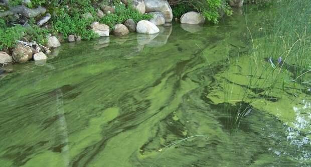 Почему ни в коем случае нельзя купаться в водоемах с избытком водорослей