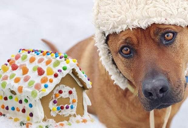 Продукты, которые не стоит давать собаке