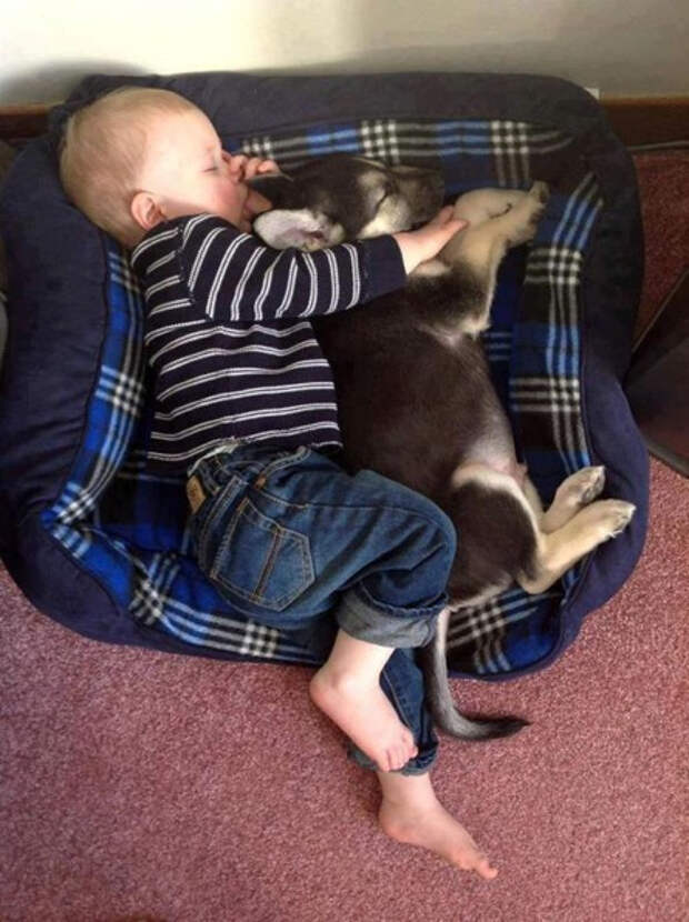 дети должны расти с домашними животными (2)