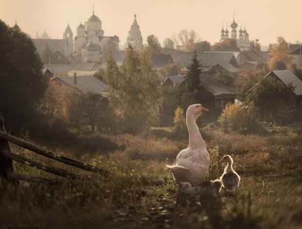 Животный мир в осени