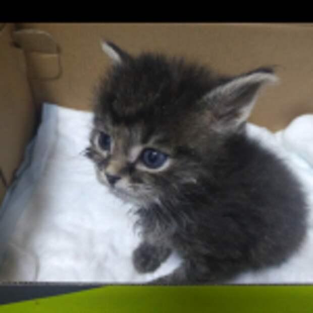 Котенок дорожал от страха перед неизвестностью