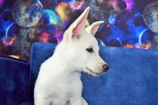 щенок в доме