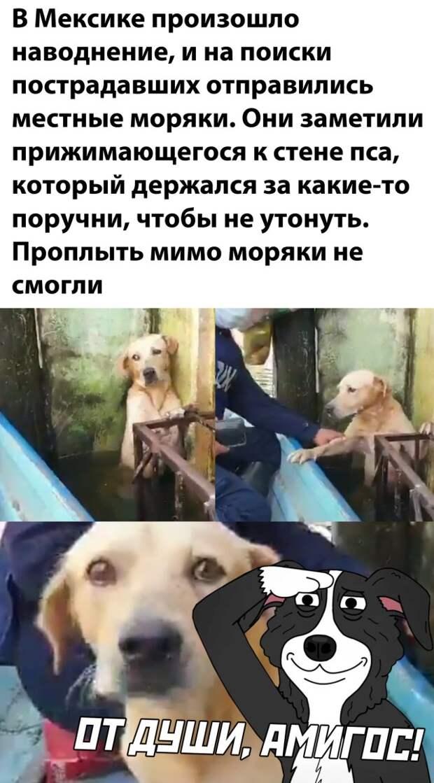 Моряки спасли собаку