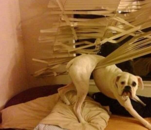 Собаки, которые проиграли эту неравную схватку