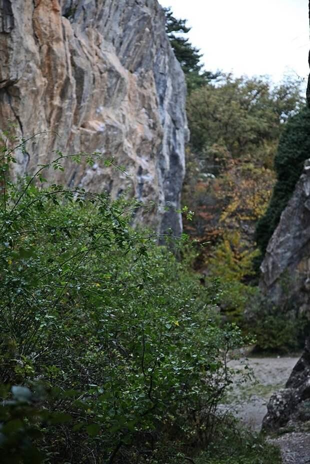 Никитские скалы - Ялта