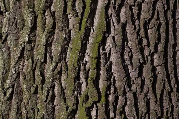 Кора, Дерево, Ок, Мох, Ствол, Вуд, Природа, Текстура