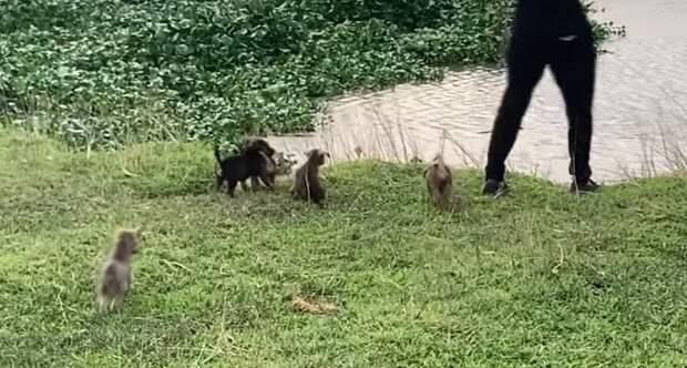 Оставшись без мамы, 5 голодных щенят бродили по складу, они хотели найти человека