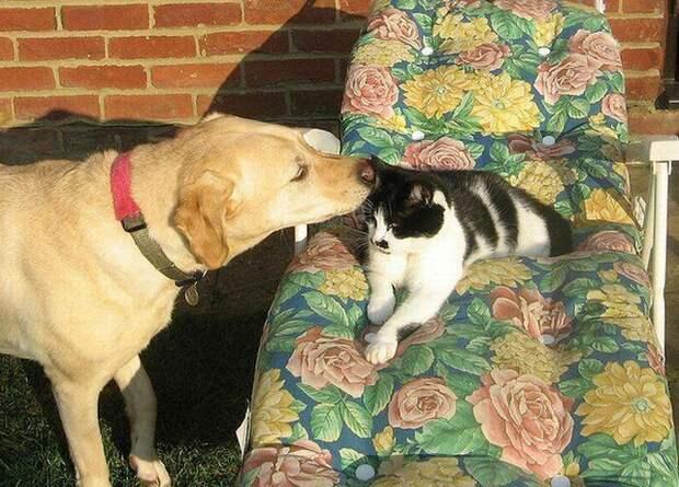 По секрету от всего света животные, коты, собака