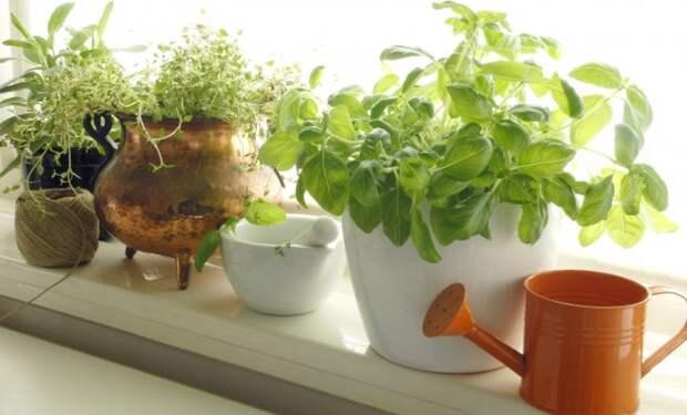 11 неприхотливых культур для вашего огорода на подоконнике