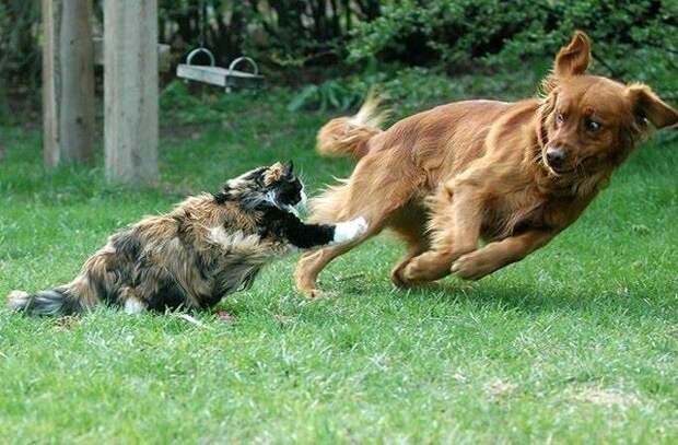 Perfectly Timed Photos - Cats Edition - humorsharing.com